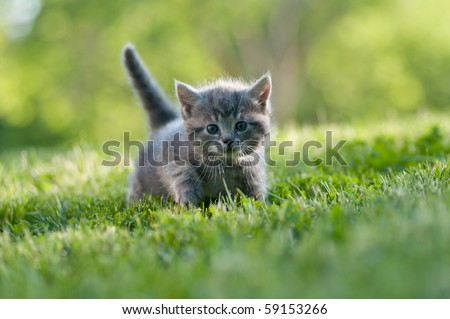 kitten in the green grass - stock photo