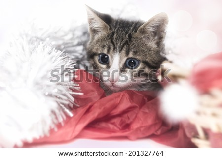 Kitten in the midst of Christmas decorations