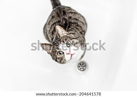 Kitten in the shower - stock photo