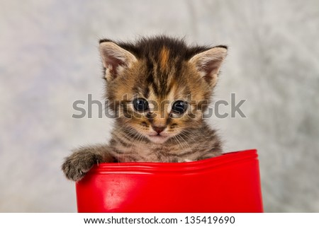 Kitten in water shoe kitten gumboot flower funny