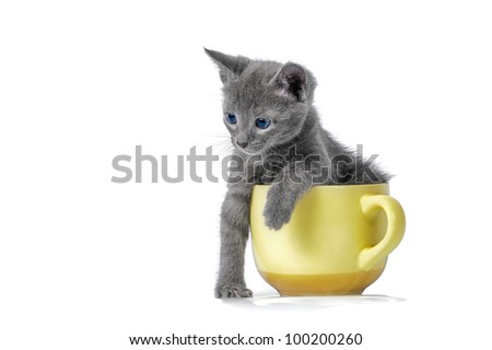 Kitten is playing with cup - stock photo