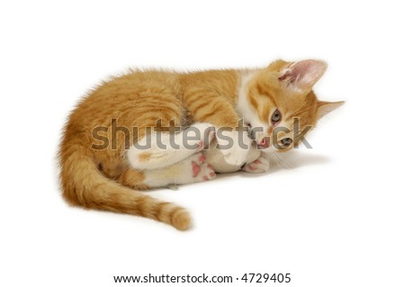 Kitten is playing with toy mouse - stock photo