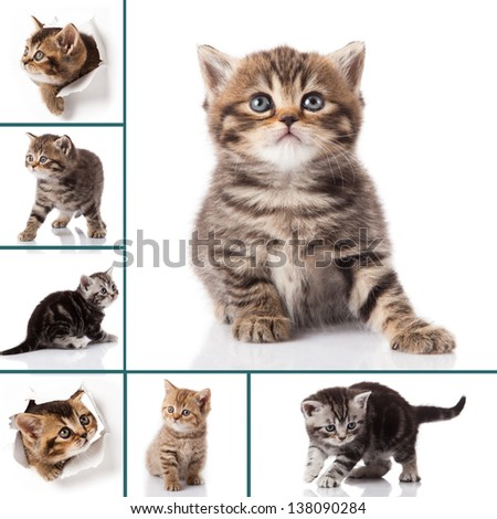 kitten isolated on white background. cat collection - stock photo
