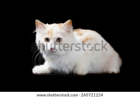 kitten isolated over black background - stock photo