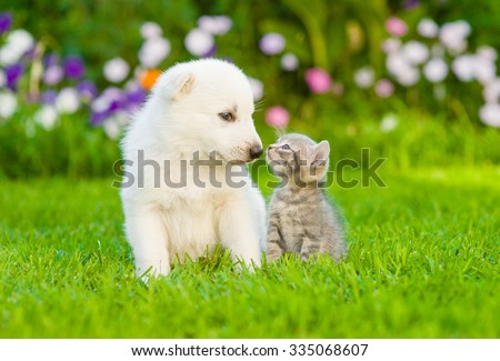 Kitten kissing White Swiss Shepherd`s puppy on green grass