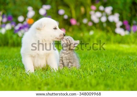 Kitten kissing White Swiss Shepherd`s puppy on green grass - stock photo