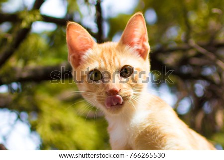 kitten Licking mouth, Little hunter, Tongue out, portrait of licking cat with green blurred background