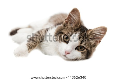 kitten lies on one side on a white background and looks in camera