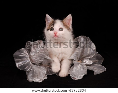 kitten look up with silver flower - stock photo