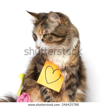 Kitten looking aside and post-its with drawn hearts - stock photo