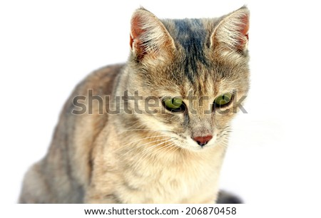 Kitten Looking Below Isolated on White - stock photo