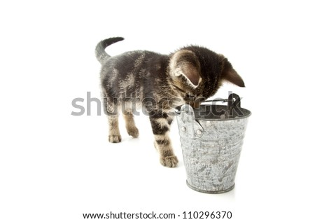 Kitten looking in zinc bucket isolated over white - stock photo