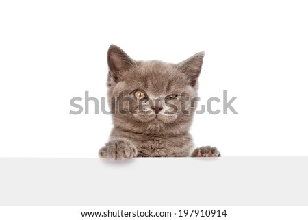 kitten looking out because of the poster. isolated on white background - stock photo