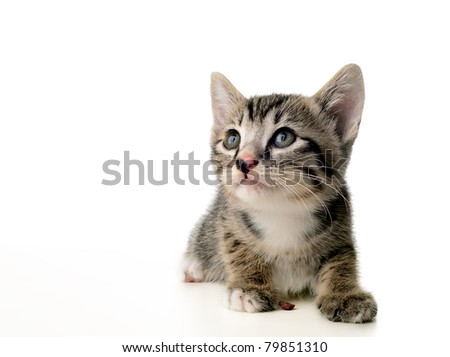 Kitten looking up