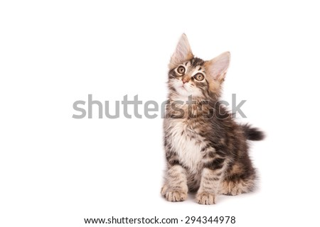 kitten looking up, isolated on white