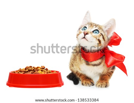 Kitten looking up near dry food in a red bowl. - stock photo