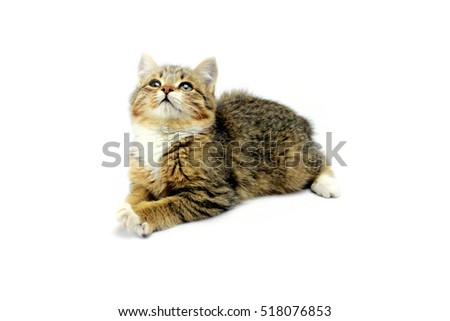 Kitten looking up on a white background