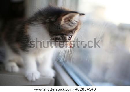 Kitten looks out the window - stock photo