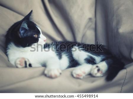 kitten lying on sofa - stock photo