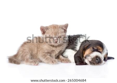 Kitten lying with sleeping basset hound puppy. isolated on white background - stock photo