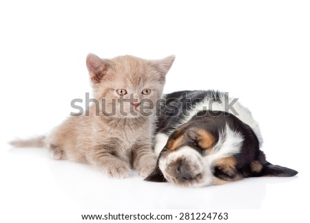 Kitten lying with sleeping basset hound puppy. isolated on white background