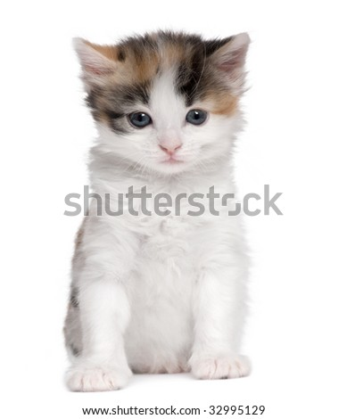 kitten (1 month old) in front of a white background