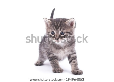 Kitten on a white background.