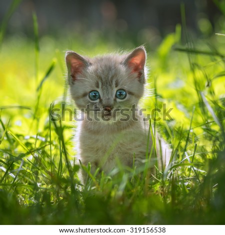 kitten on grass close up - stock photo