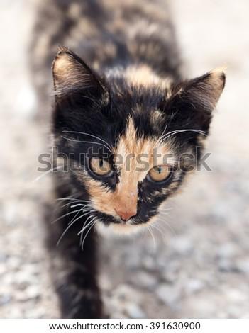 kitten on nature - stock photo