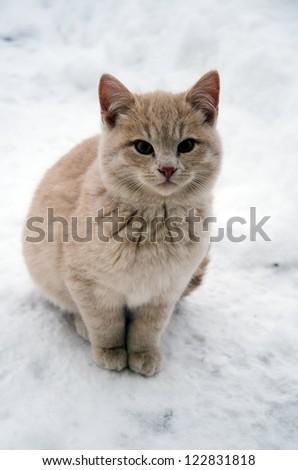 kitten on snow - stock photo