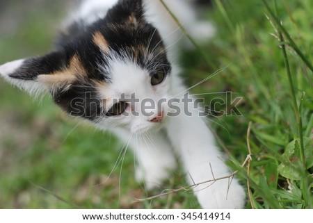 Kitten on the grass  - stock photo