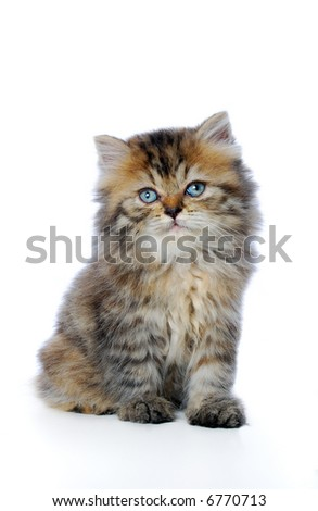 Kitten on white background