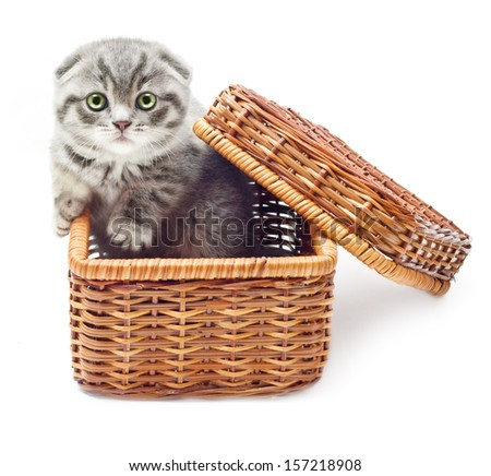 Kitten on white background in straw basket.British Shorthair cat. - stock photo