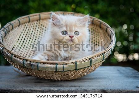 Kitten on wooden basket in green field - stock photo