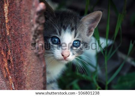 Kitten peeking from the rusty metal step of the rustic farmer's barn - stock photo
