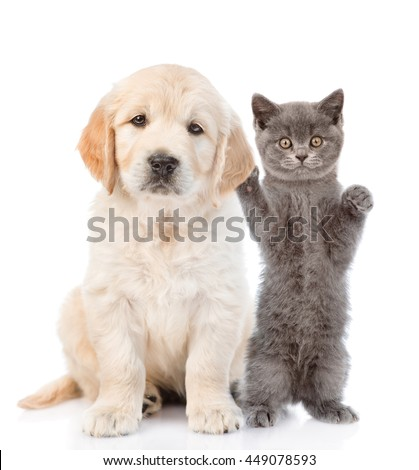 Kitten petting a puppy behind the ear. isolated on white background