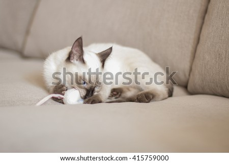 Kitten playing - stock photo