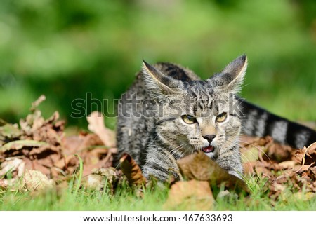 Kitten playing on the meadow with leaves