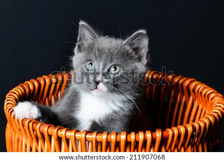 Kitten playing or sitting in a basket - stock photo