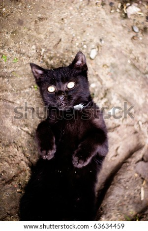 Kitten playing outside and looking at photographer (series Animals) - stock photo