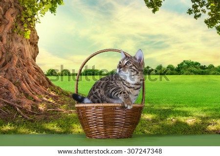 kitten playing under a tree on a sunny day - stock photo