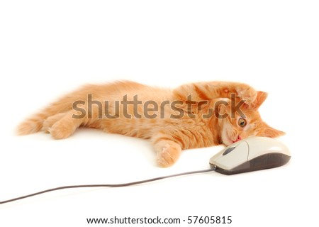 kitten playing with computer mouse isolated on white background - stock photo