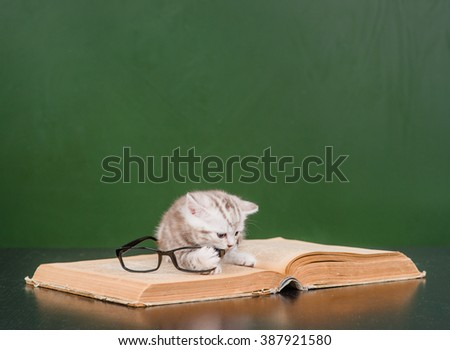 kitten playing with glasses on a book - stock photo