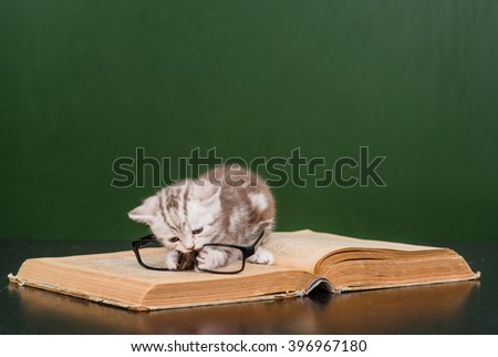 kitten playing with glasses on a book near empty chalkboard - stock photo