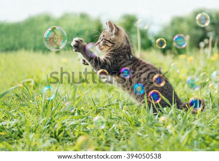 Kitten playing with soap bubbles on green field in summer, side view - stock photo