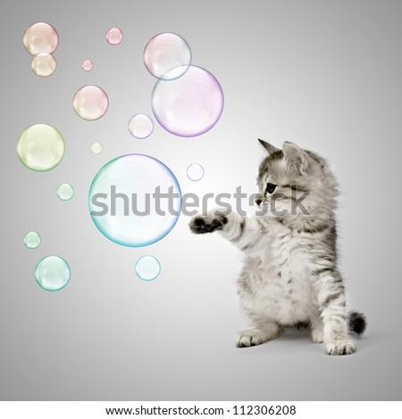 Kitten playing with soap bubbles over grey background - stock photo