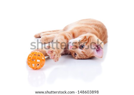 Kitten playing with toy isolated - cat - stock photo