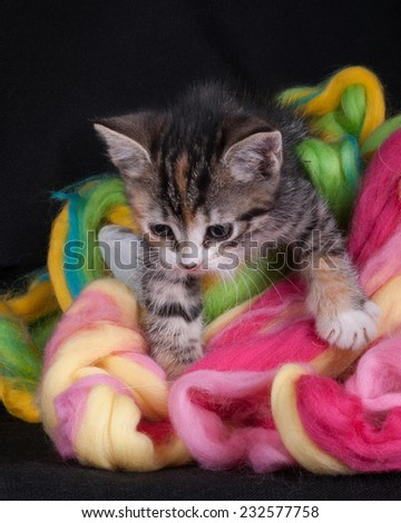 kitten playing with wool in the studio on a black background - stock photo