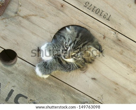 Kitten poking out of hole - stock photo