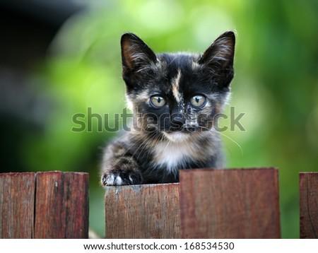 Kitten Portrait  - stock photo